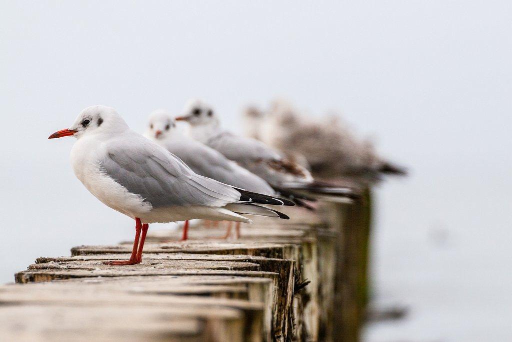 Przyroda wybrzeża bałtyckiego